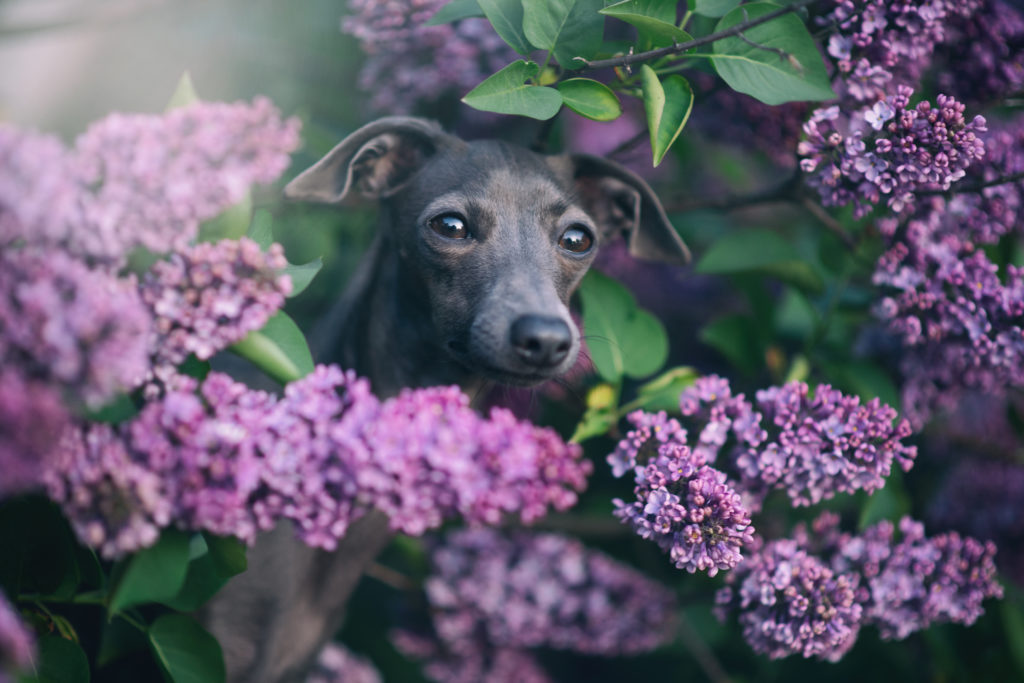Fotograf Oberösterreich Hunde Familie Menschen Portrait