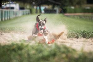 Hundefotograf Peoplefotograf Tierfotograf Oberösterreich Österreich
