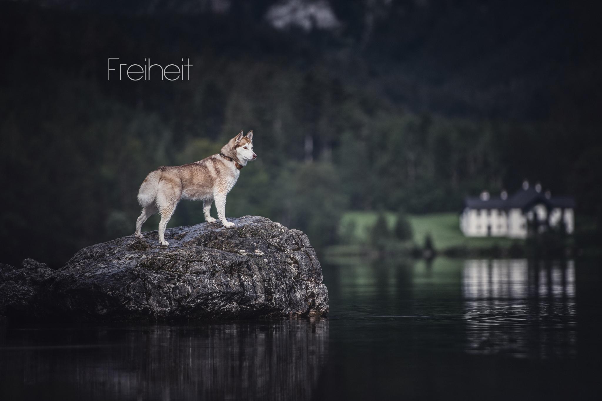 Fotograf Hundefotograf Peoplefotograf Tierfotograf Oberösterreich Österreich